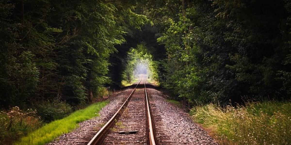 México: El Tren Maya propuesto por AMLO costará miles de millones de dólares