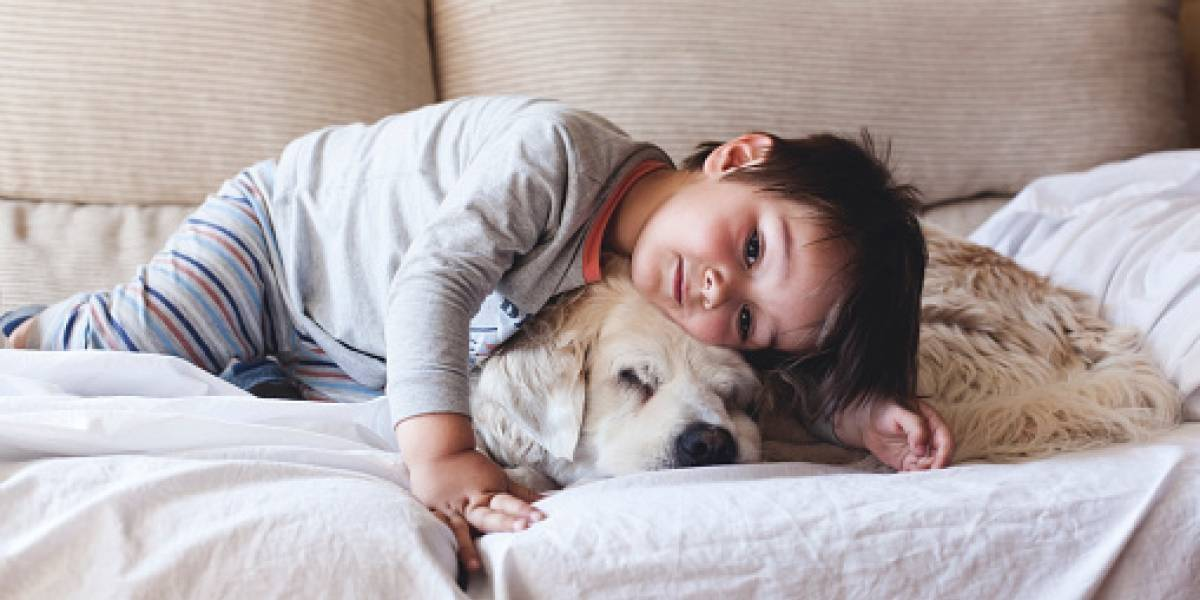 ¡Todo un  héroe! Perro salva a niña de 11 años de ser abusada