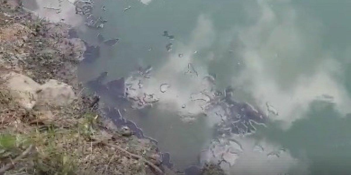 DRNA investiga charca llena de aceite cerca de conocida planta en Bayamón