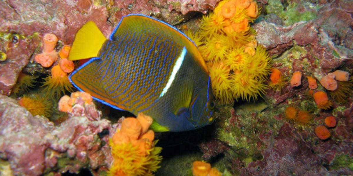 El arrecife de coral colombiano que ha sobrevivido contra todo pronóstico