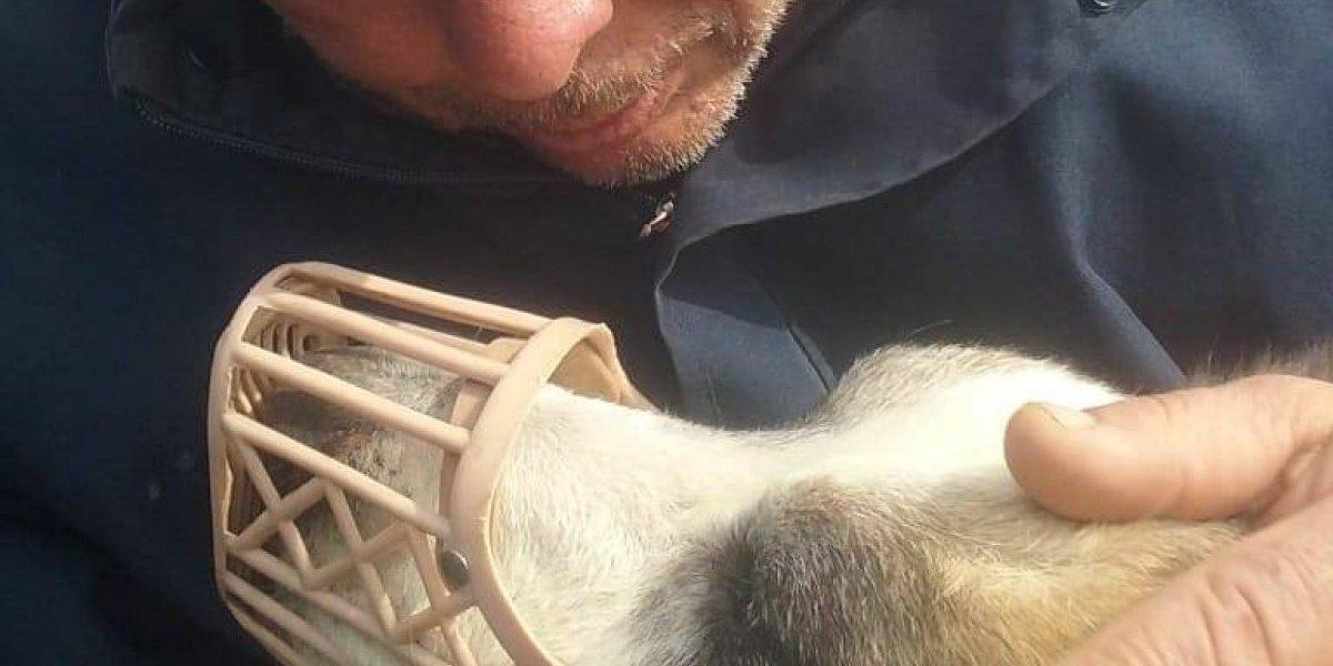 Eran inseparables: murió de dolor luego de ver el video con la brutal golpiza que le dieron a su perro