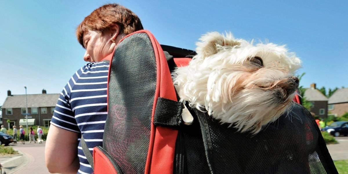 Test de conducta que le ayudará a conocer al perro que quiere adoptar