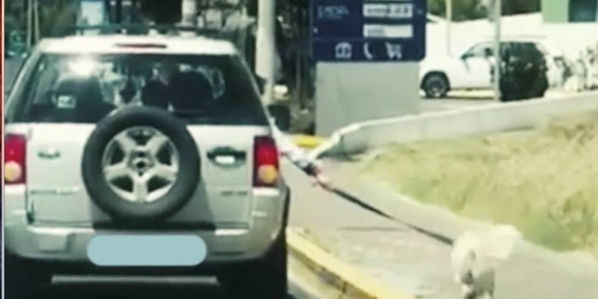 VIDEO: Dueño llevaba a su perro fuera del auto en la autopista Rumiñahui