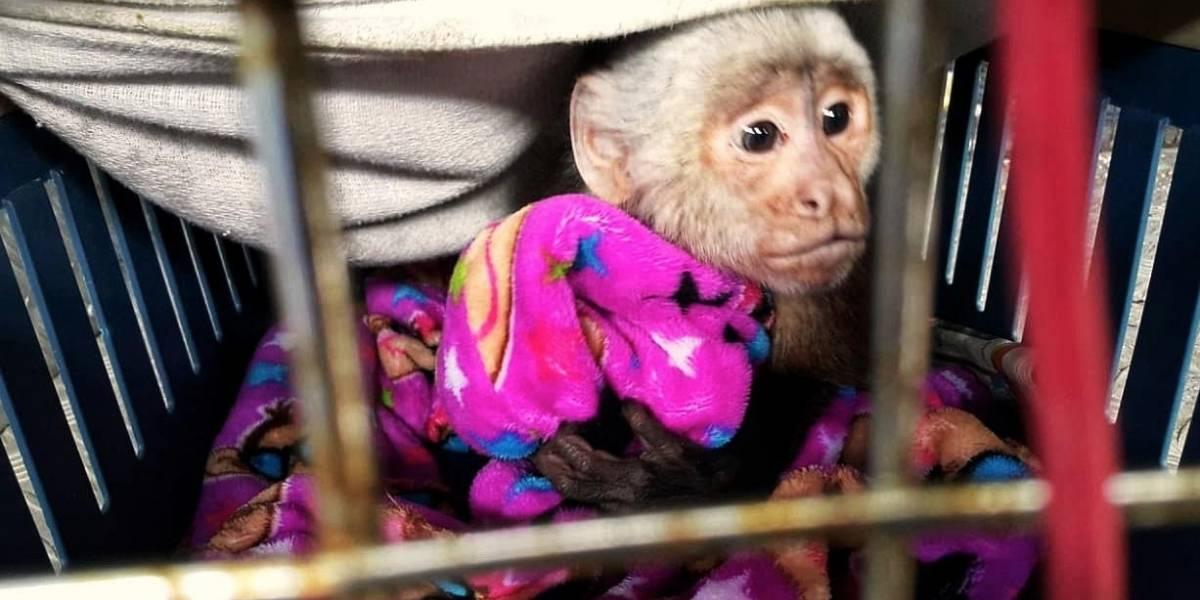 Familia en Bogotá tenía mono enjaulado como mascota hace más de un año