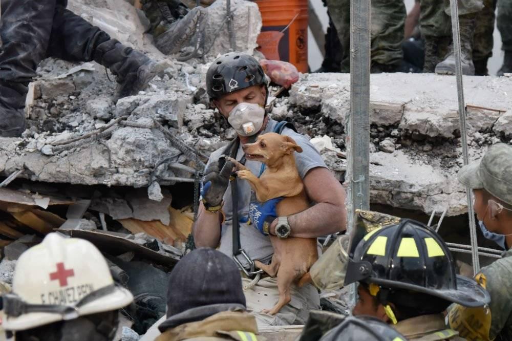 Las mascotas también deben participar. Foto: Cuartoscuro