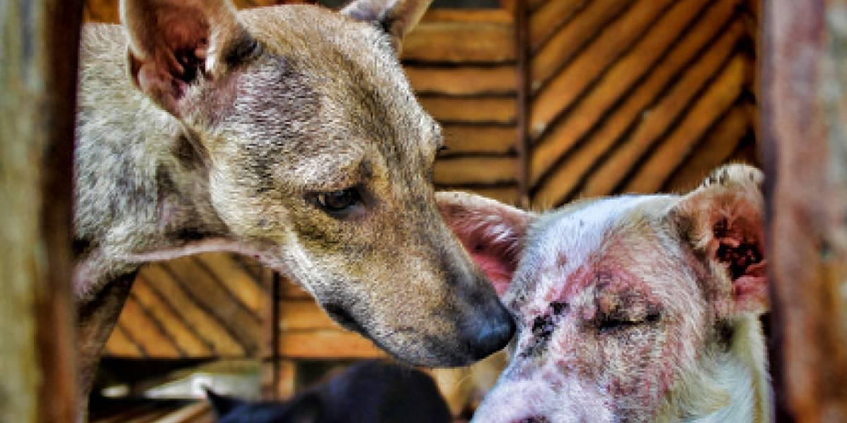 ¿A quién llamar en caso de encontrar un perro herido?
