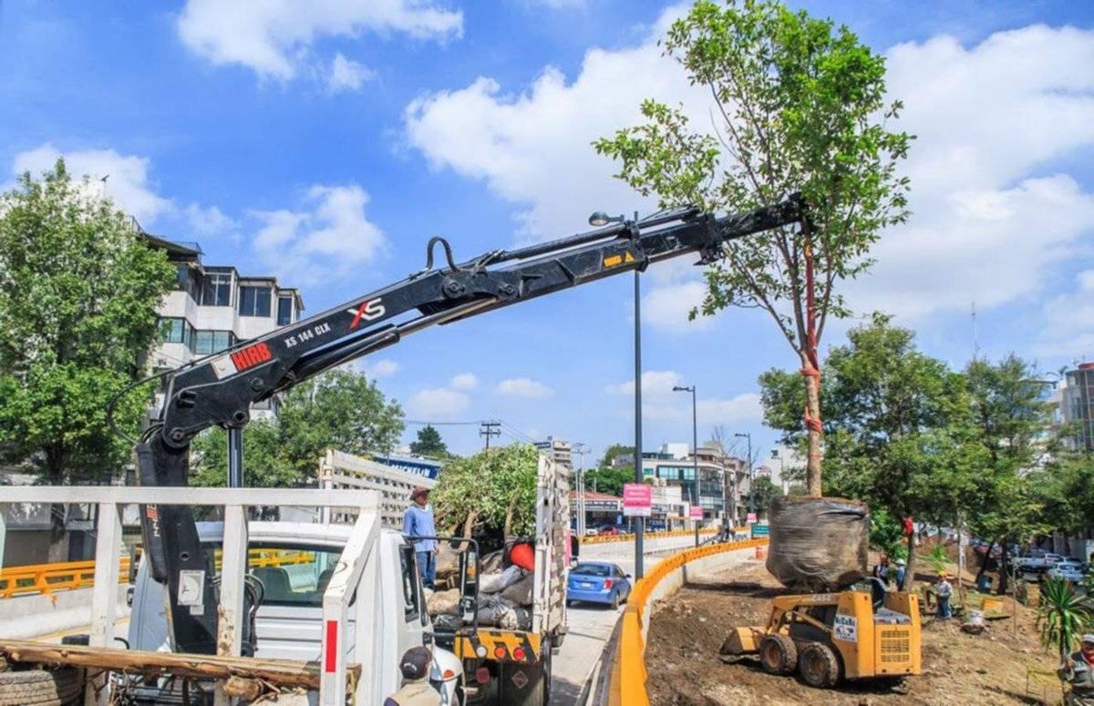 Se han reforestado más de seis mil árboles de 2016 a la fecha. Cortesía.