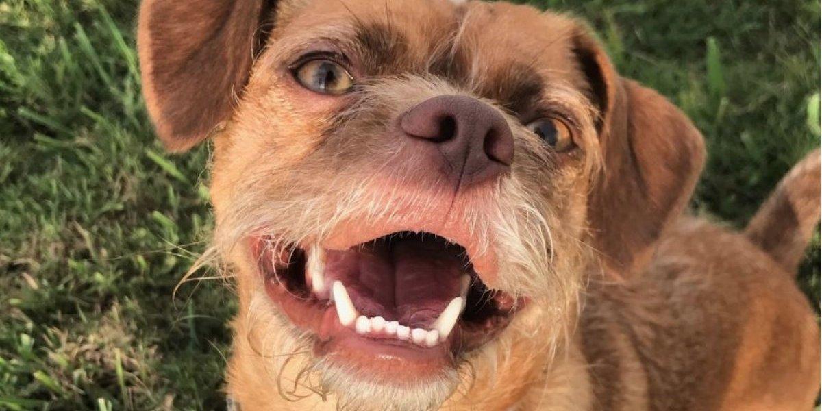 """FOTOS. Conoce a Bacon, el perro barbudo con """"rostro humano"""" que arrasa en las redes"""