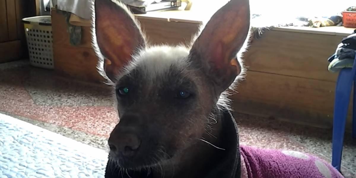 """VIDEO: Perro peruano dice """"mamá"""" y asombra en redes sociales"""