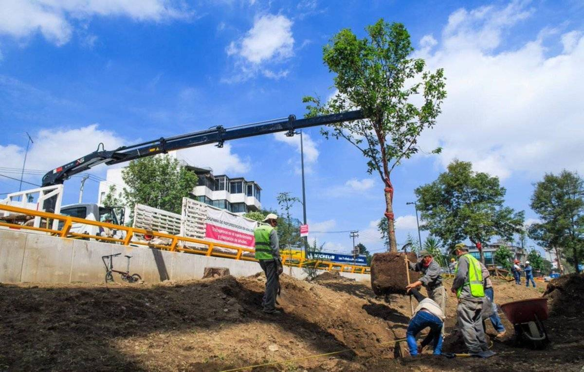 En lo que va del año sólo se han plantado 327 árboles. Cortesía.