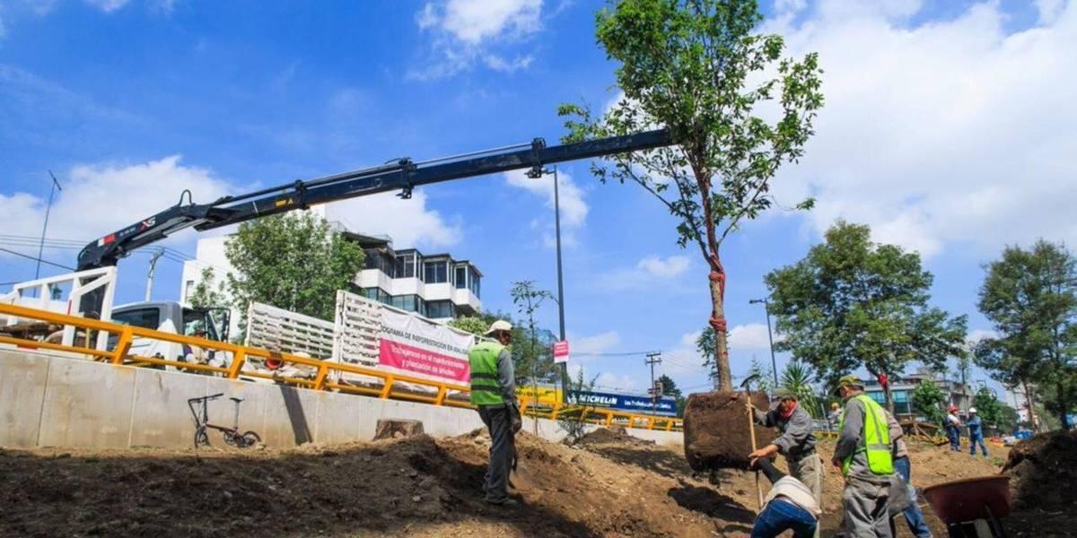 Bajó 42% reforestación de árboles en la CDMX