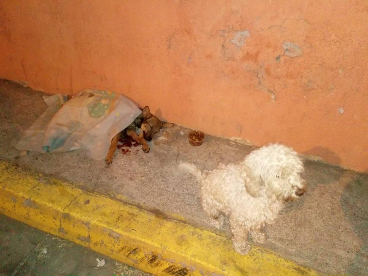 Perro herido en sector de Calderón (Quito)