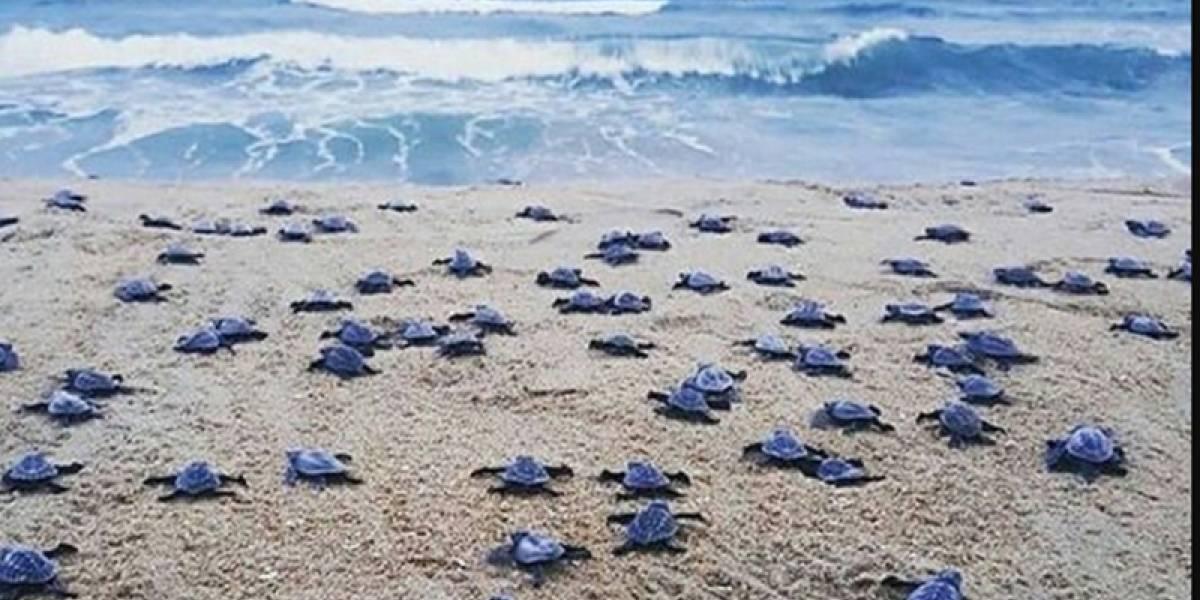 Mueren decenas de tortugas por culpa de jóvenes que bailaron y bebieron sobre ellas