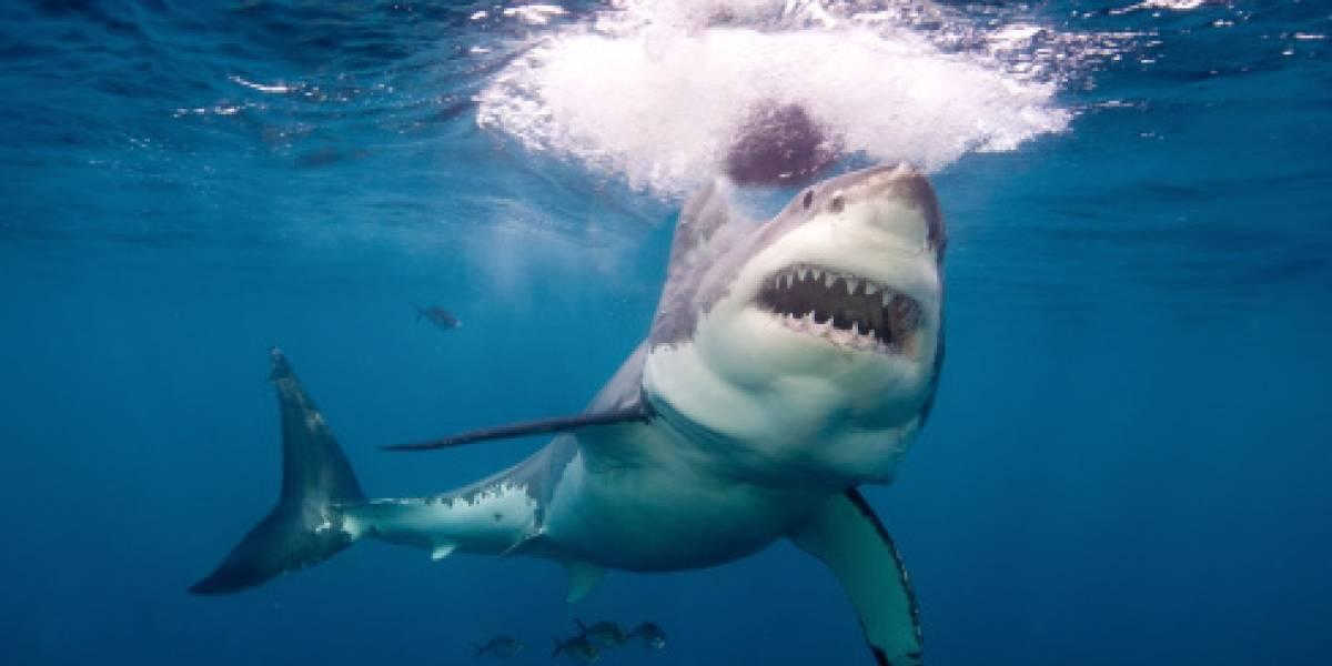 La televisión le salvó la vida: sobrevivió a un fatal ataque de tiburón gracias a un particular truco