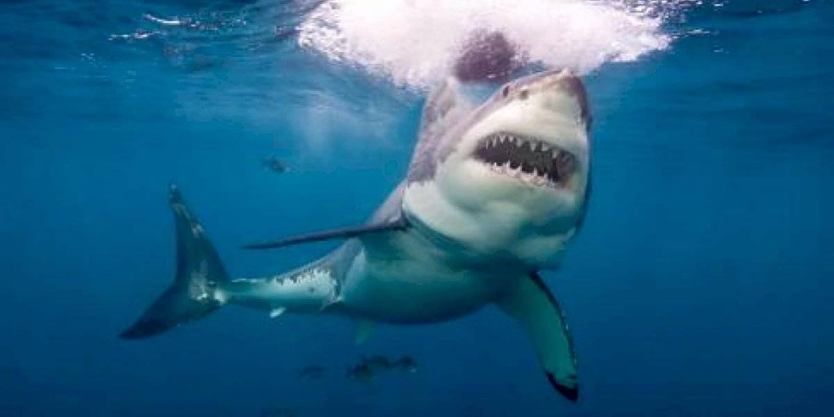 Surfista profesional fue atacado por un tiburón y en vez de ir al hospital para tratar sus heridas se fue a tomar a un bar