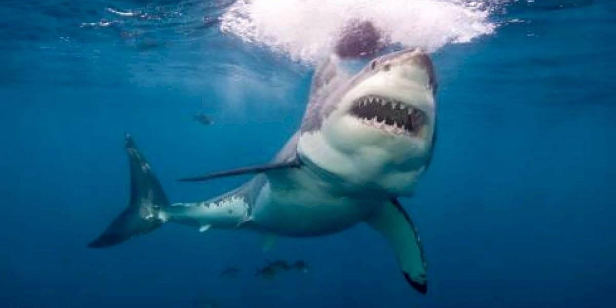 Joven fue de vacaciones a Bahamas y muere tras ser atacada por tres tiburones