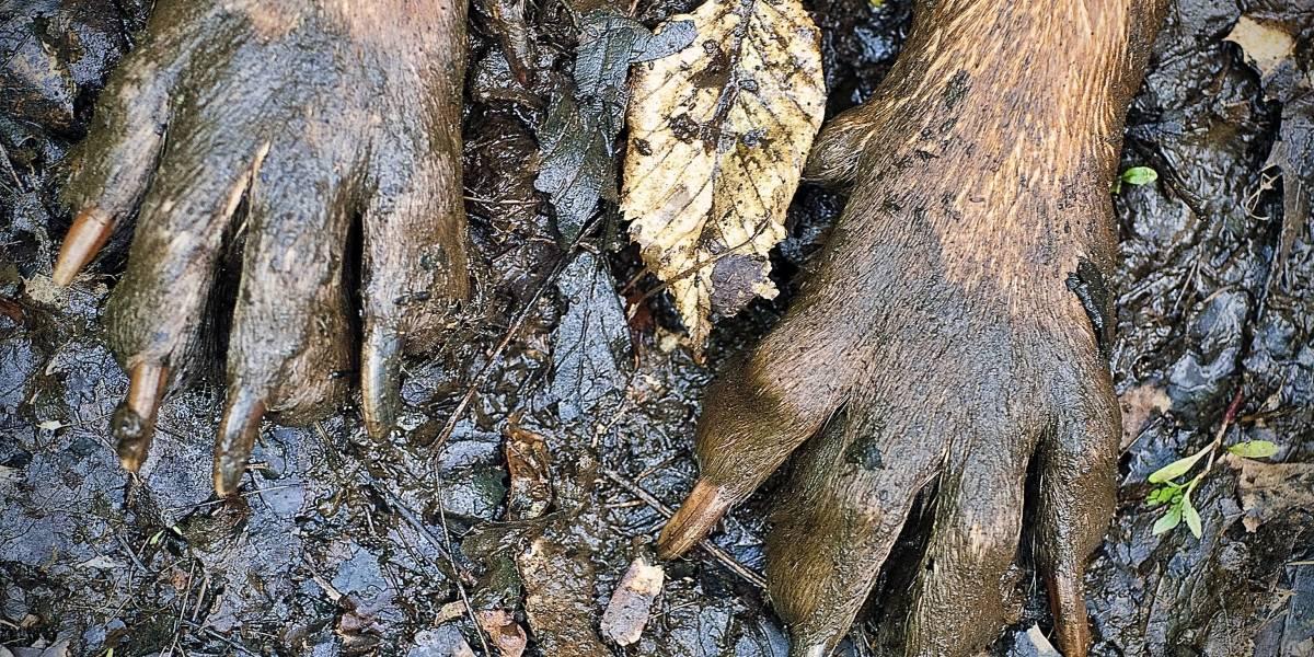 VIDEO. Perro aún busca a su familia que perdió durante la tragedia del volcán de Fuego