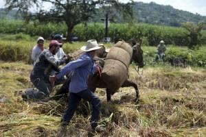 Arroz de Morelos