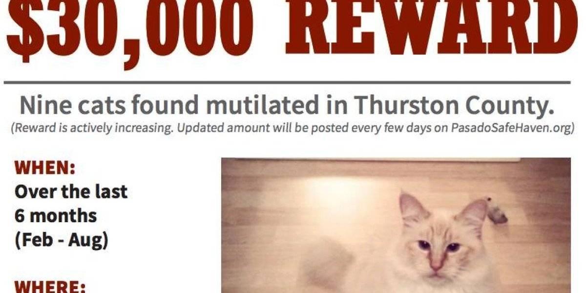 Sujeto mato a una docena de gatos y dejo sus cuerpos mutilados en la calle