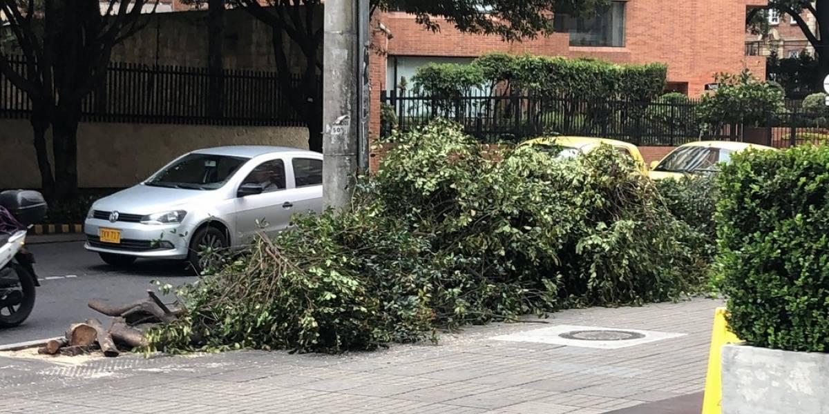Denuncian que la Alcaldía de Bogotá ordenó talar árboles en plena madrugada