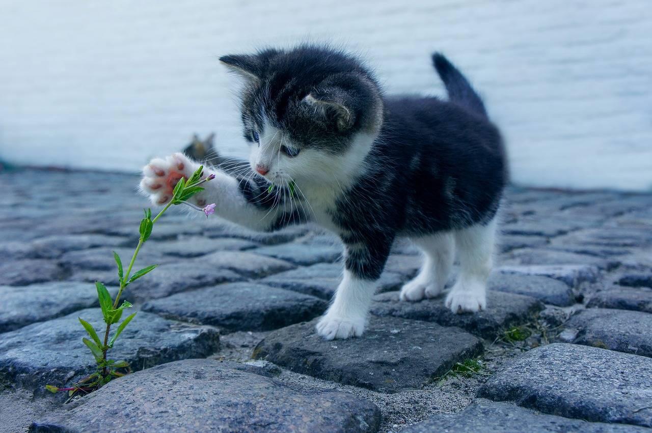Un pueblo en Nueva Zelanda quiere prohibir que la gente tenga gatos, ¿por qué?