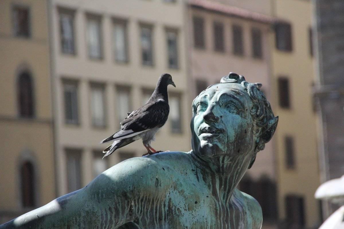 Las palomas pueden alcanzar vertiginosas velocidades de vuelo de hasta 150 kilómetros por hora Foto: Pixabay