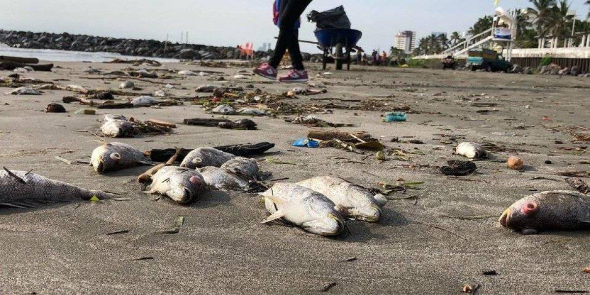 Playas de Veracruz amanecen con peces muertos