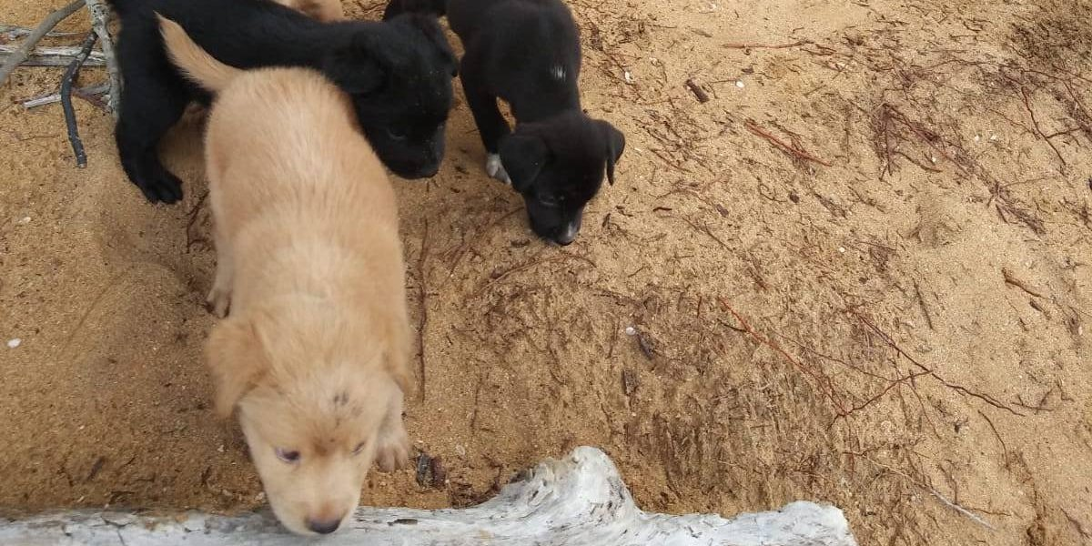Envenenan cachorritos que iban a ser rescatados