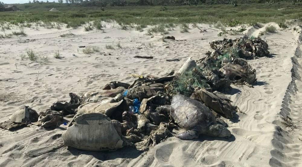 Tortugas muertas en Oaxaca Foto: Twitter @PROFEPA_Mx