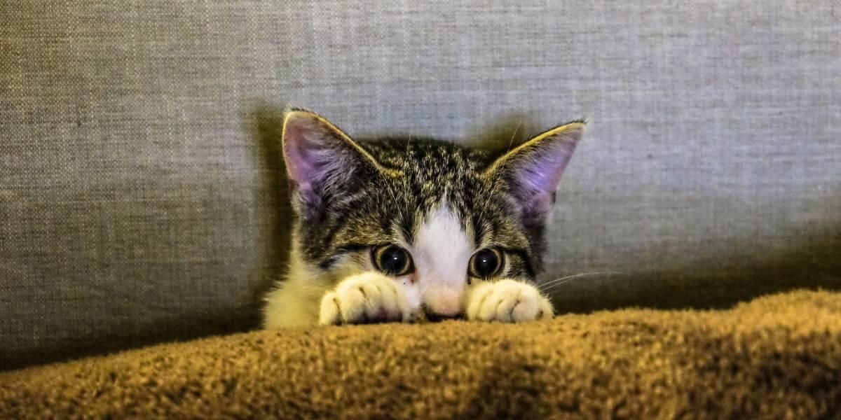 Gosta de gatos? Cidade na Nova Zelândia quer proibir os bichanos