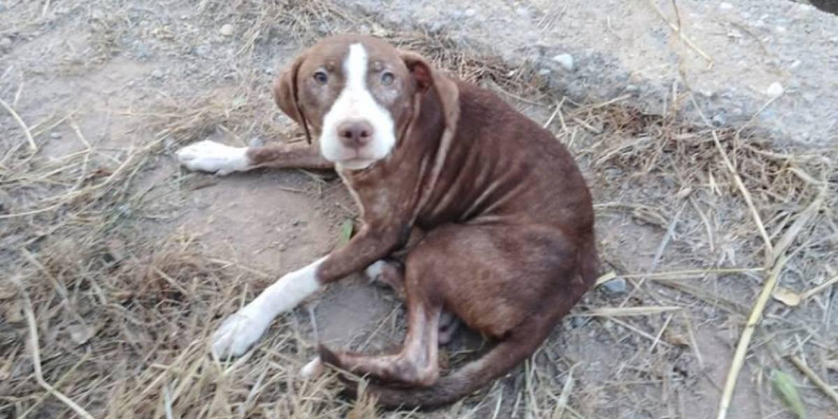Hombre de 75 años con alzheimer se perdió y fue cuidado toda la noche por un perro callejero