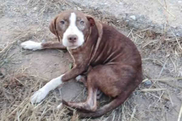 Un perro corrió 20 cuadras a dueños que intentaban abandonarlo