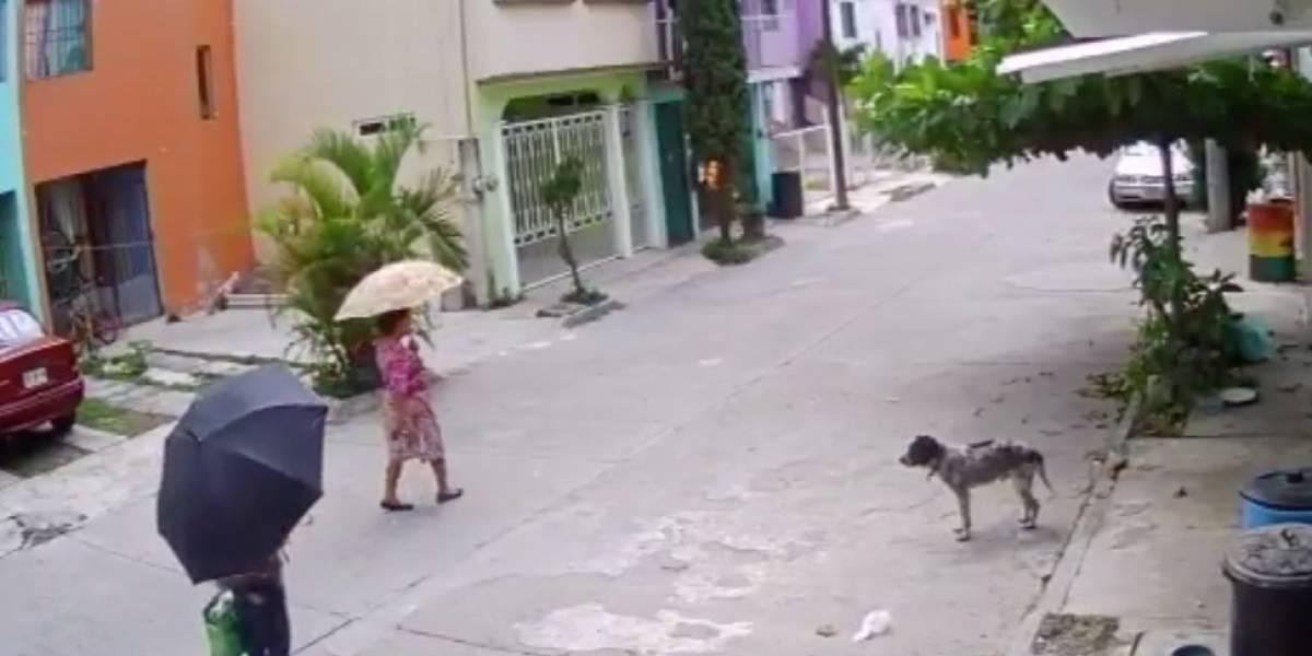 Video: Mujeres robaron platos para la comida de indefenso perro