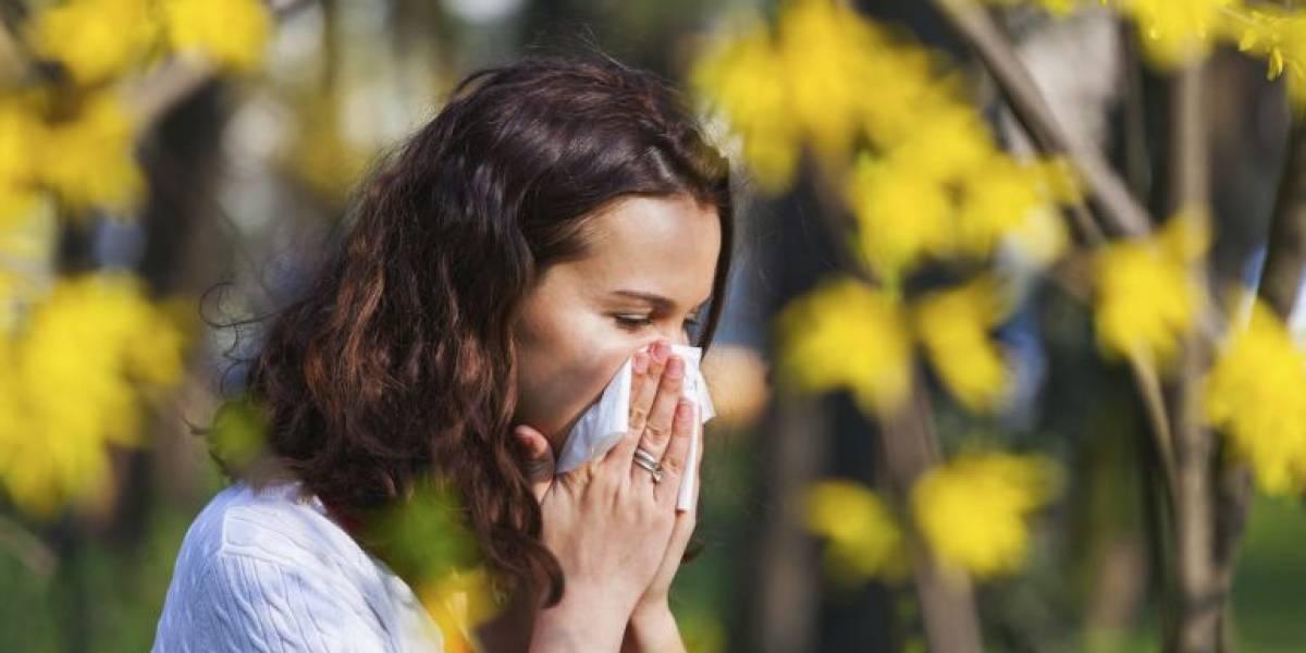 ¿Alérgico? Estas son las 4 alergias más frecuentes en Chile durante la primavera