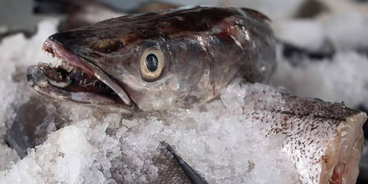 Polémica en local comercial: colocaban ojos de plásticos a los pescados que vendían para que se vieran más frescos
