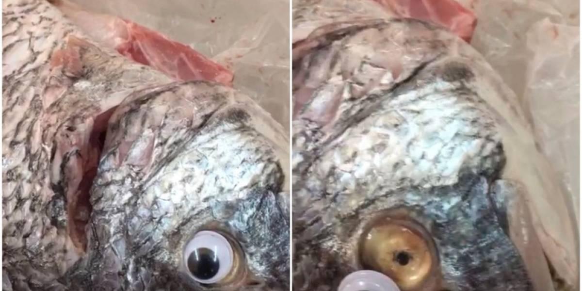 ¡Insólito! Ponen lentes de contacto a pescados para que parezcan frescos