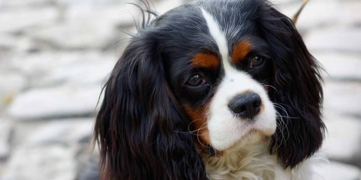Cão salva vida de bebê engasgado com vômito