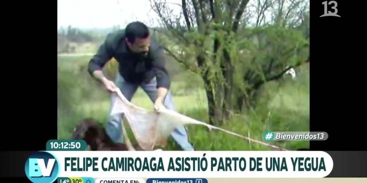 Revelan inédito video de Felipe Camiroaga asistiendo el parto de una yegua