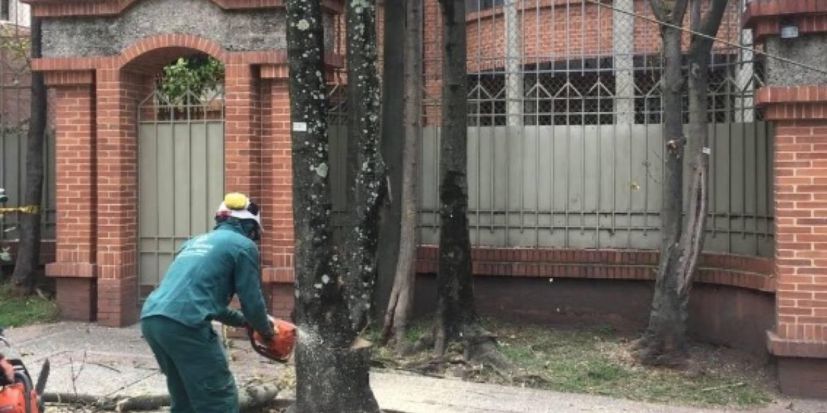 ¿Bogotá vive un arboricido o una renovación?