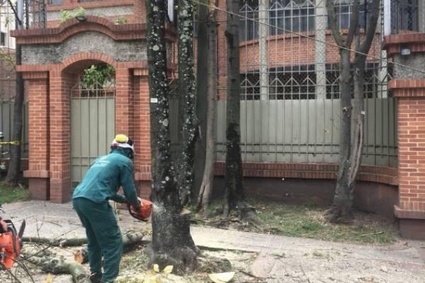 Crece la polémica por tala de árboles en Bogotá