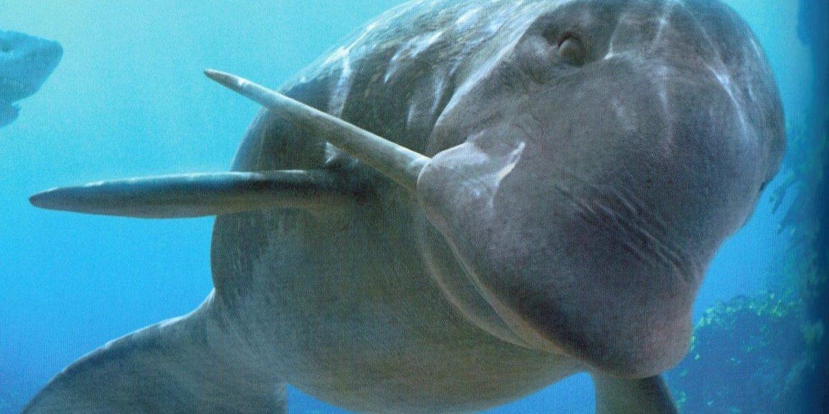Delfín prehistórico llega al Museo Nacional de Historia Natural