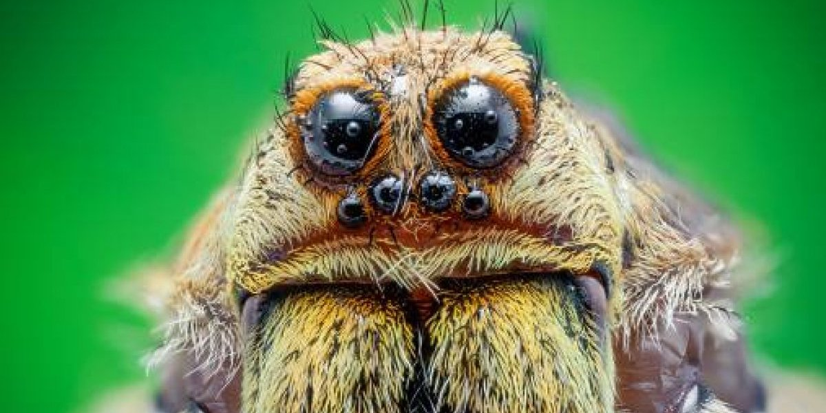 Araña tejía telarañas dentro del oído de su paciente