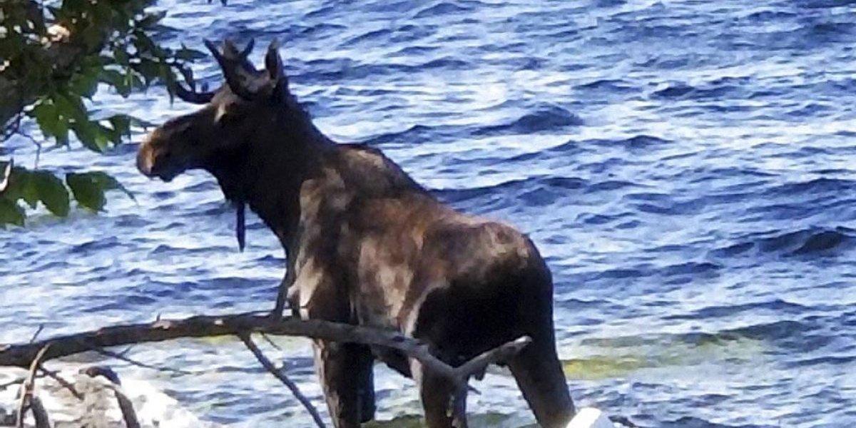Salió a cazar, disparó a lo que creía era un alce y cuando llegó a ver a su presa había matado a su hijo de 18 años