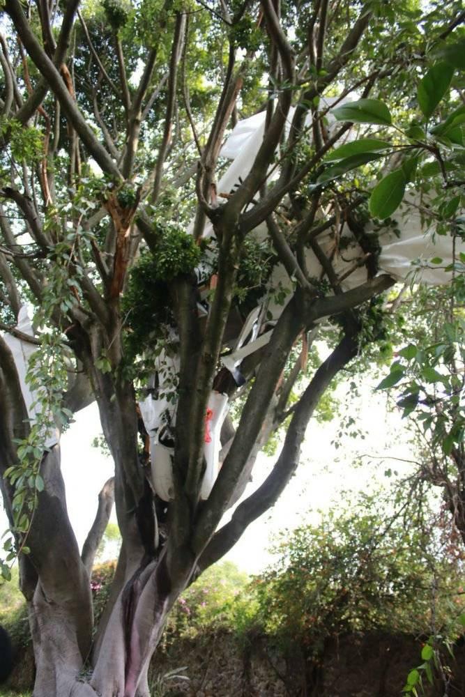La aeronave se detuvo en las ramas de un árbol Foto: Twitter @Bermudez_FJ