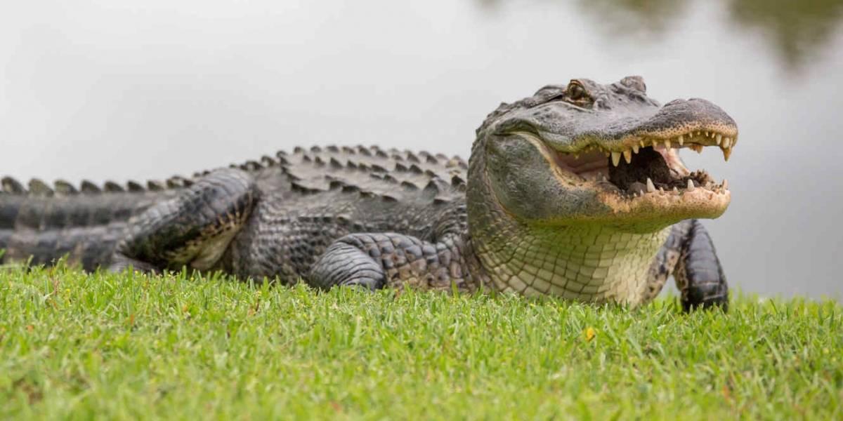 Fueron a buscar agua a un lago y terminaron muertos: gigantesco cocodrilo devora a madre y a su pequeño bebé de 5 meses