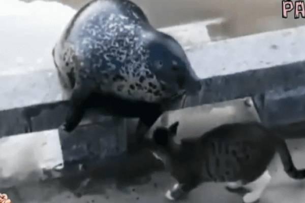 El gato mató a la foca en un solo movimiento