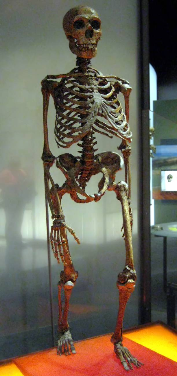 Esqueleto neandertales