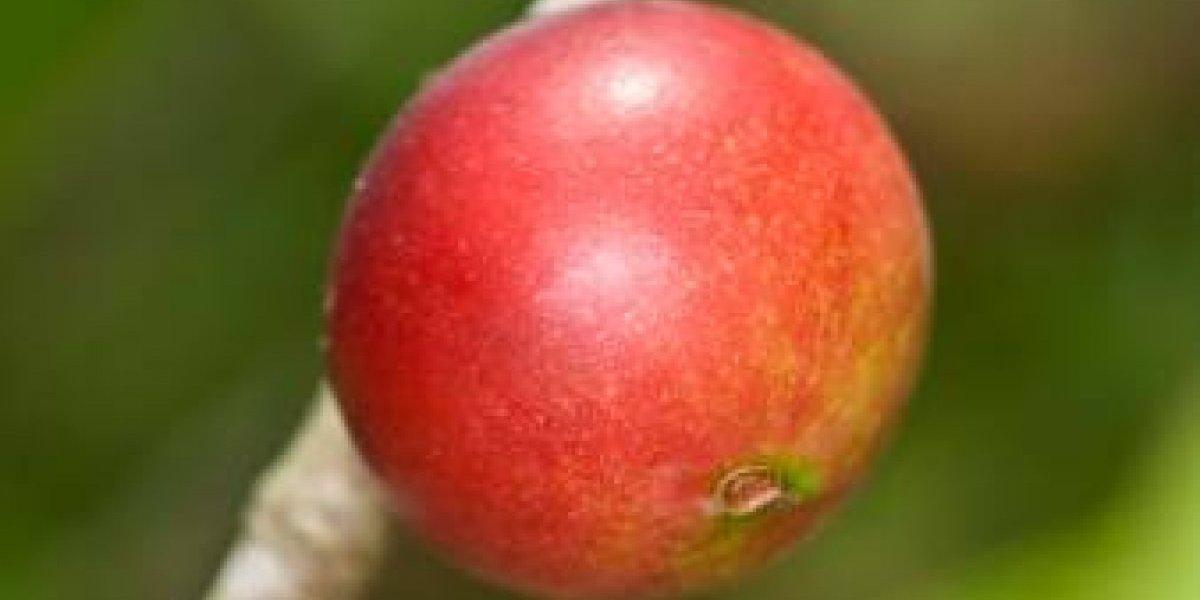¿Comer sin engordar?: estudio revela que consumir fruta del Amazonas ayuda enormemente a no engordar