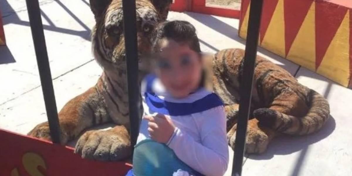 Denuncian a circo por maltrato animal y la policía se lleva una sorpresa al llegar al lugar de los hechos