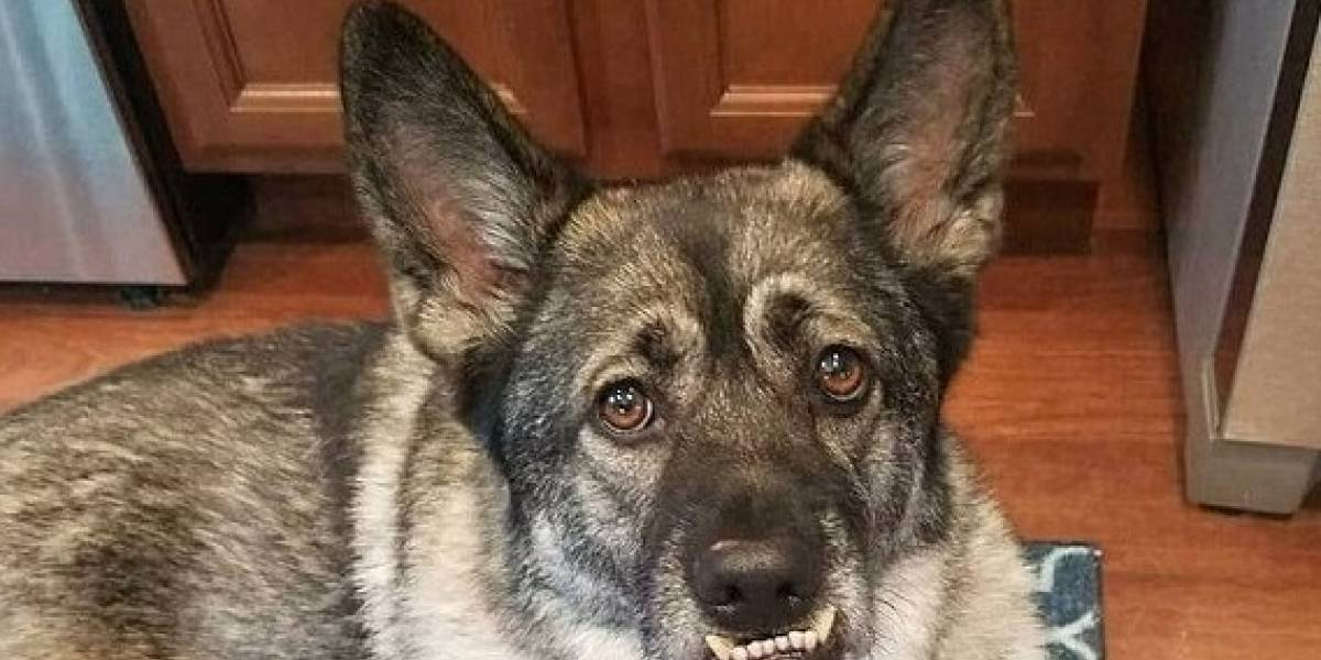 Macabra tortura: dan un perrito a grupo de presos como programa de rehabilitación y lo golpean salvajemente hasta la muerte